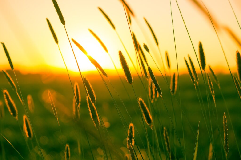 summer, dusk, twilight
